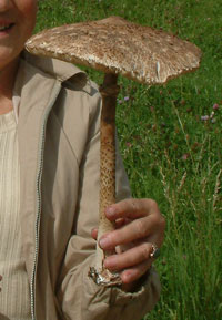 Poland holidays - see the great mushroom quest