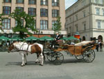 Cracow: take a sightseeing tour around the Old Town in an elegant horse-drawn carriage