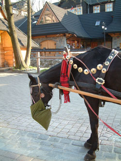 Poland for selfcatering horse riding holidays